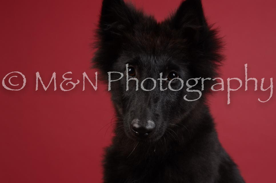 M&N Photography -DSC_3364