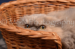 M&N Photography -DSC_0517