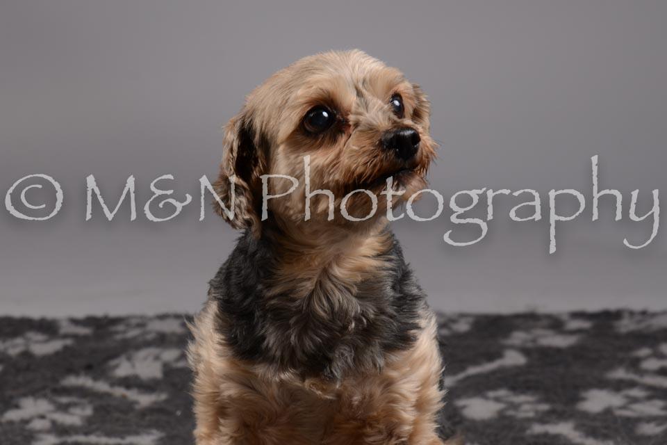 M&N Photography -DSC_1794