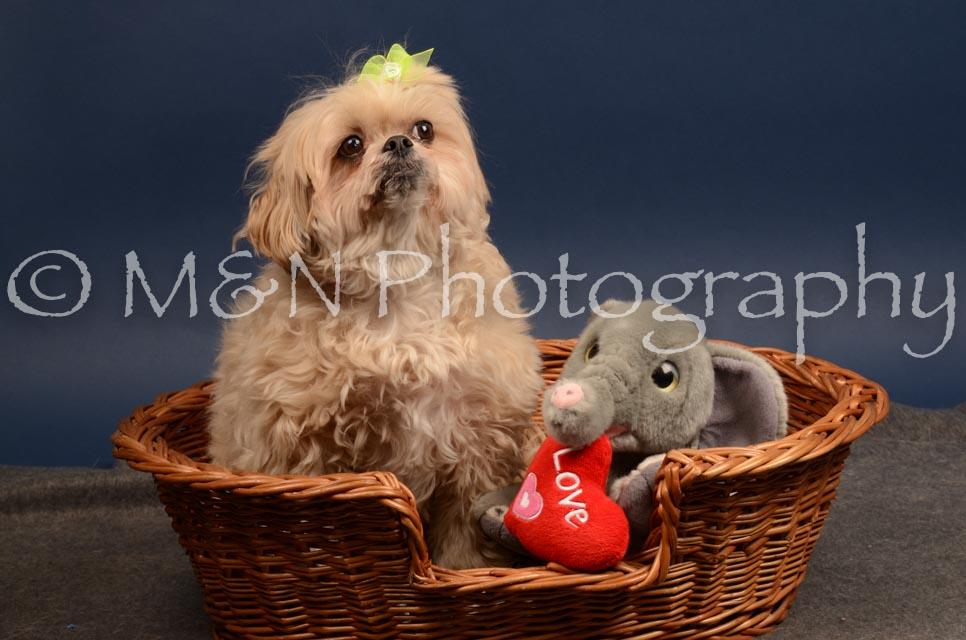 M&N Photography -DSC_4488