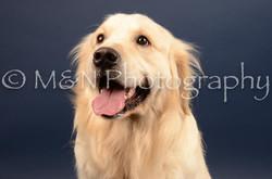 M&N Photography -DSC_4550