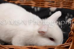M&N Photography -DSC_1685