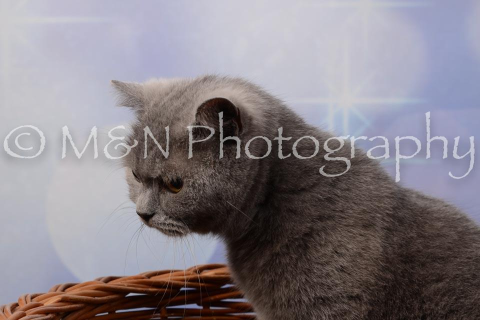 M&N Photography -DSC_6985