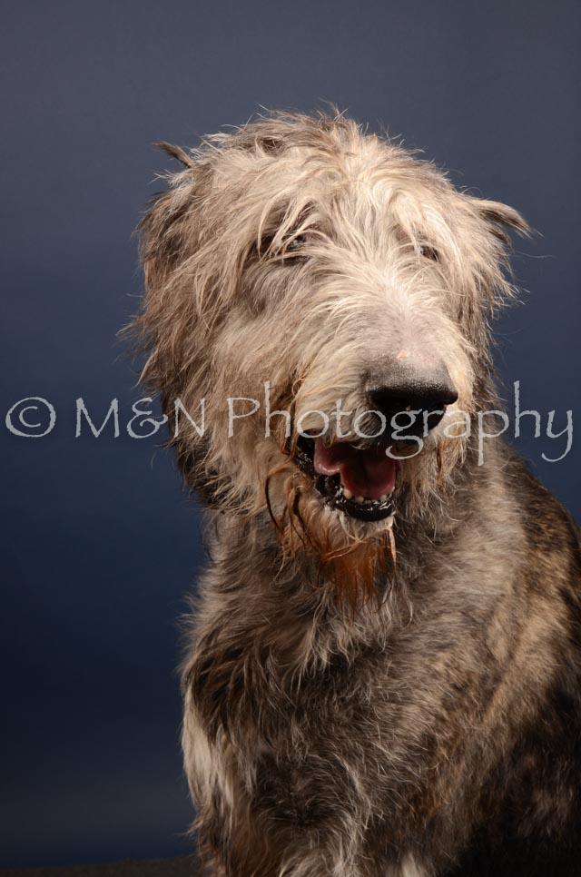 M&N Photography -DSC_4437