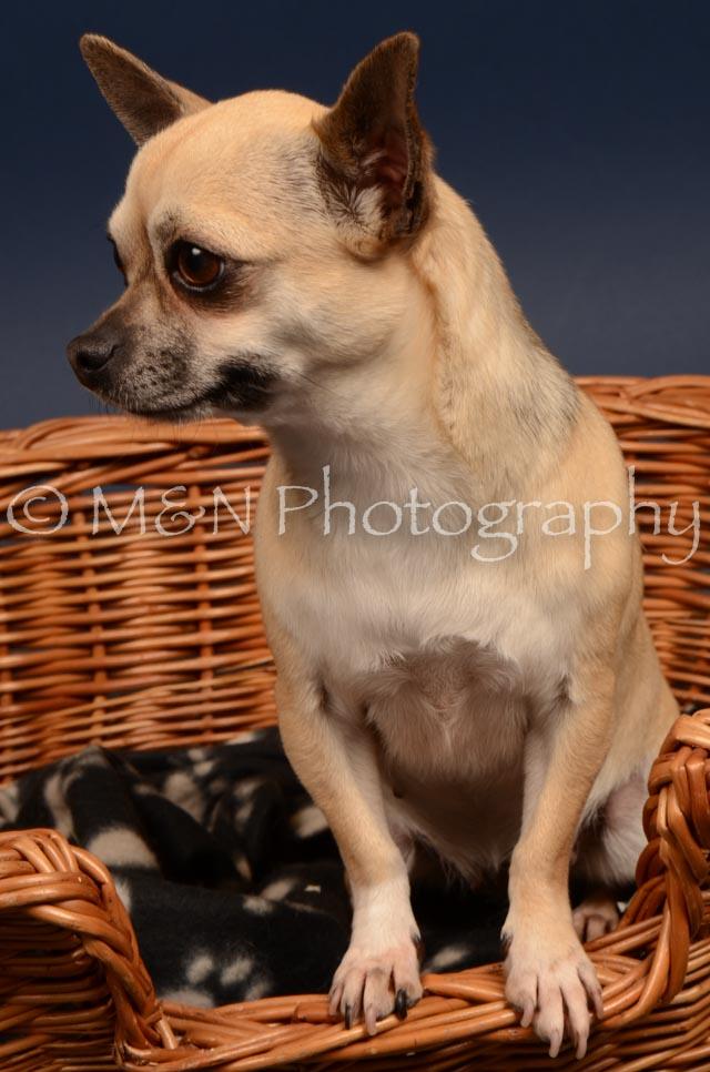 M&N Photography -DSC_4572