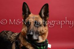 M&N Photography -DSC_8594