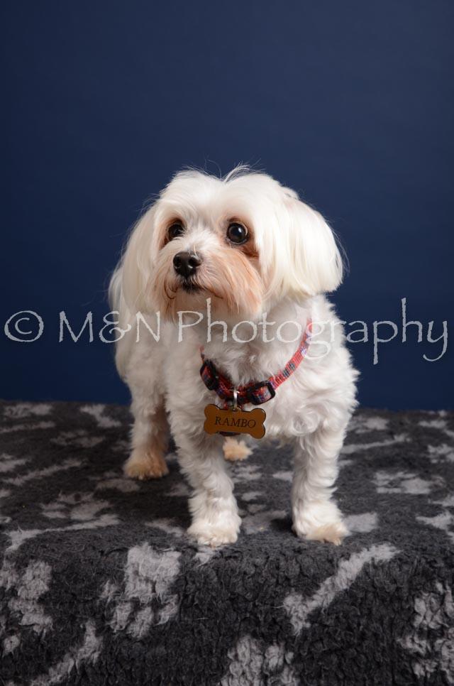 M&N Photography -DSC_4248