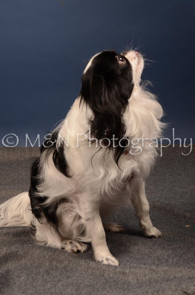 M&N Photography -DSC_4065