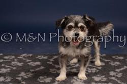 M&N Photography -DSC_0850