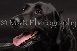 M&N Photography -DSC_0026