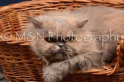 M&N Photography -DSC_0516