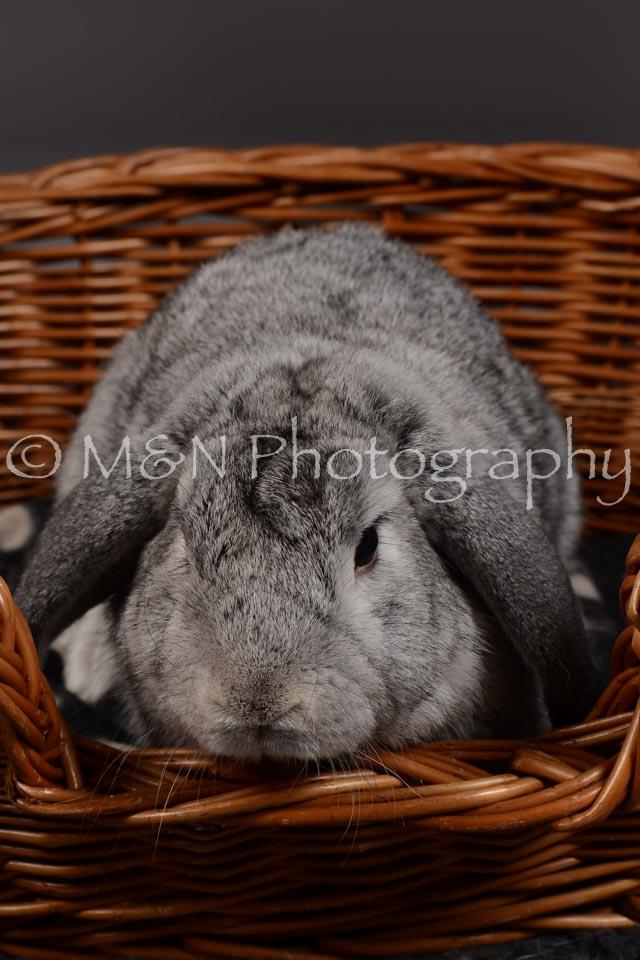 M&N Photography -DSC_2283