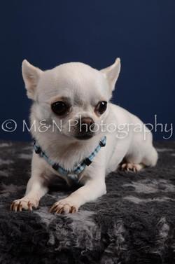M&N Photography -DSC_3951
