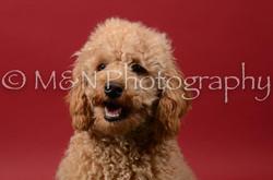M&N Photography -DSC_6695