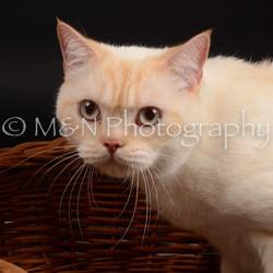 M&N Photography -DSC_9639