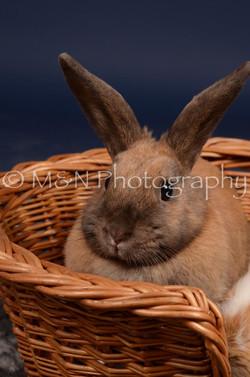 M&N Photography -DSC_0777