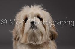 M&N Photography -DSC_2047