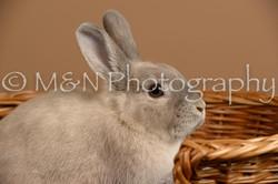 M&N Photography -_SNB0502