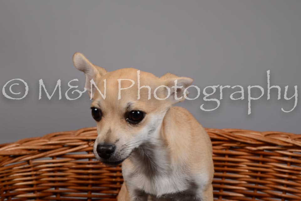 M&N Photography -DSC_1870