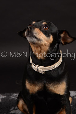 M&N Photography -DSC_9651
