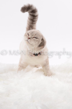 M&N Photography -DSC_8805