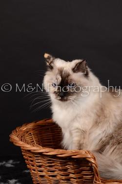 M&N Photography -DSC_5558