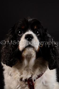 M&N Photography -DSC_5481