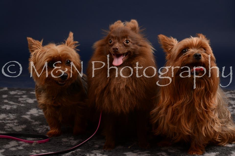 M&N Photography -DSC_0423