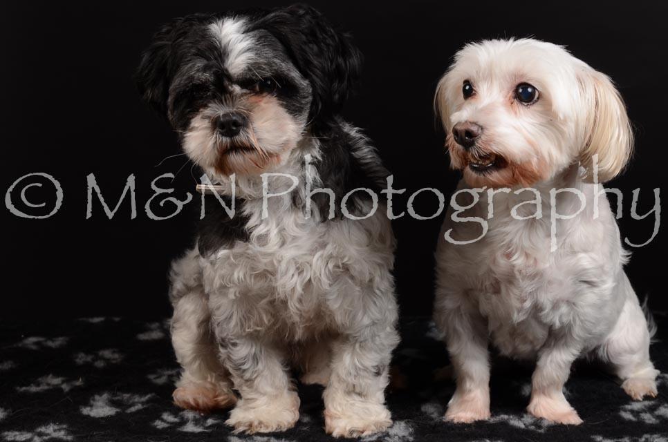 M&N Photography -DSC_5772