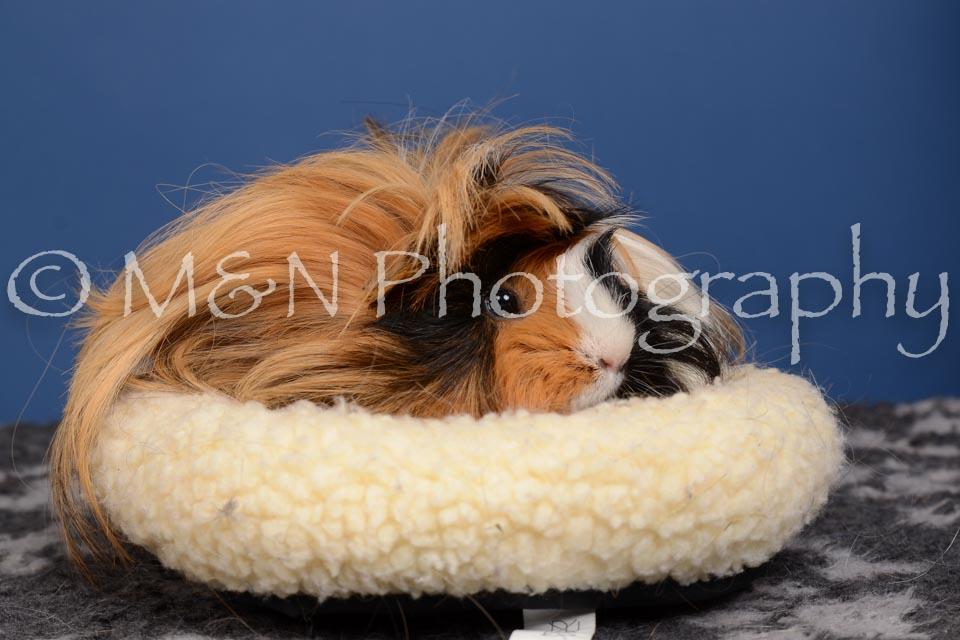 M&N Photography -DSC_5341