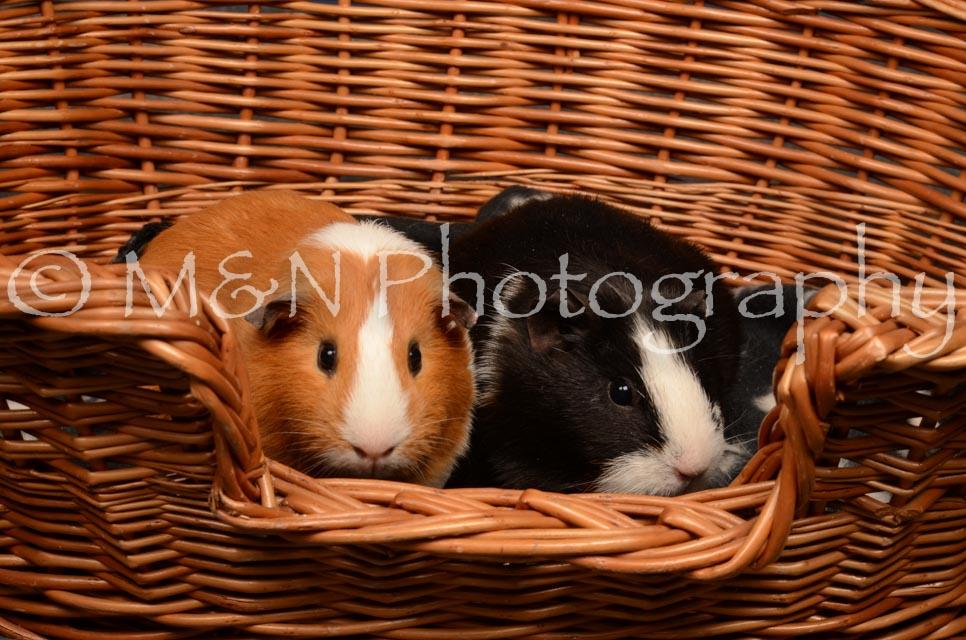 M&N Photography -DSC_4742