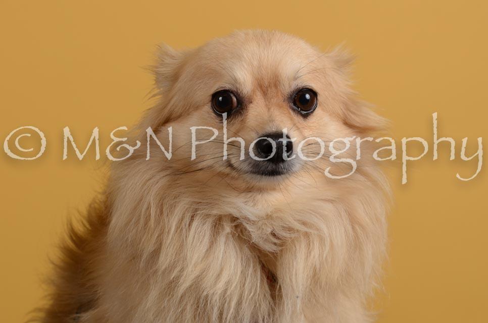 M&N Photography -DSC_4827