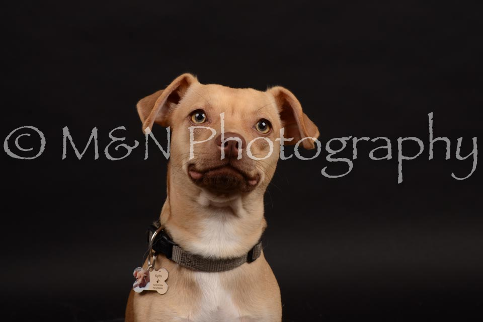 M&N Photography -DSC_0114
