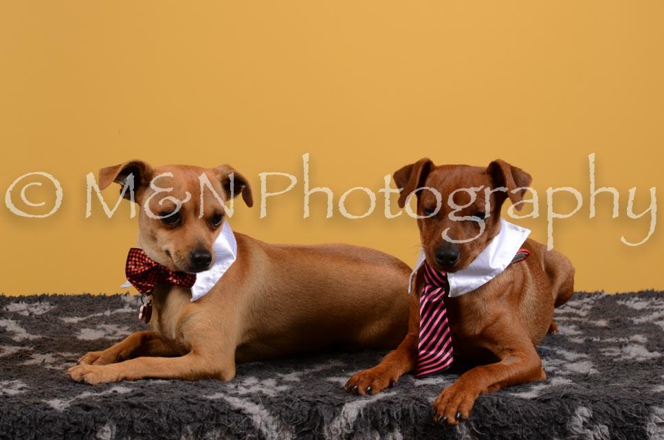 M&N Photography -DSC_4651