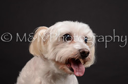 M&N Photography -DSC_5782