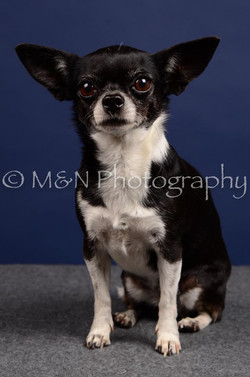 M&N Photography -IMG_4548