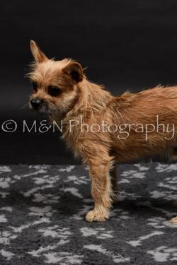 M&N Photography -DSC_2532
