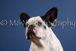 M&N Photography -DSC_5012