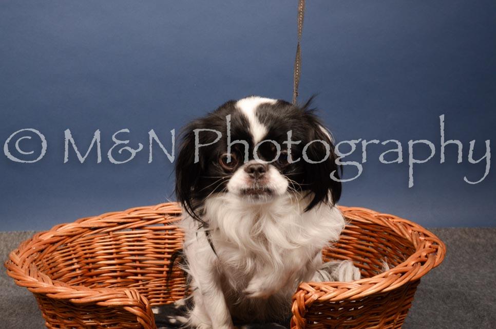 M&N Photography -DSC_4068