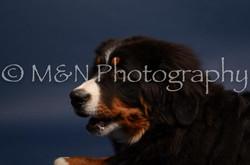 M&N Photography -DSC_3773