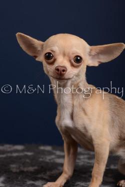M&N Photography -DSC_4200