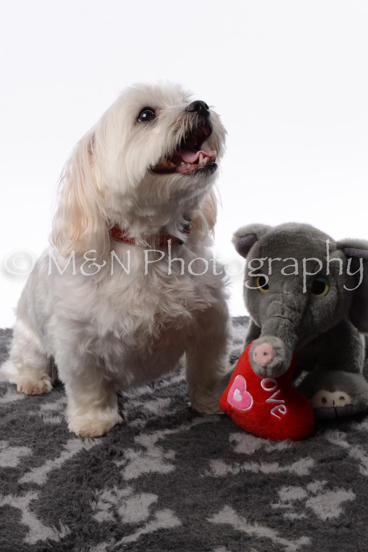 M&N Photography -DSC_8698