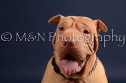M&N Photography -DSC_0305