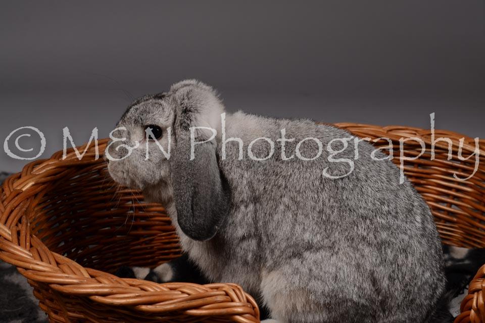M&N Photography -DSC_2281