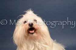 M&N Photography -DSC_4130