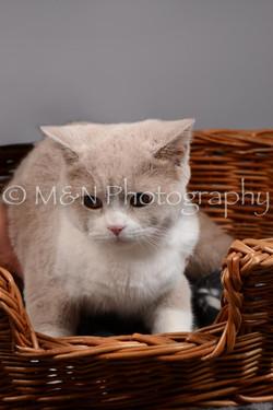 M&N Photography -DSC_1596