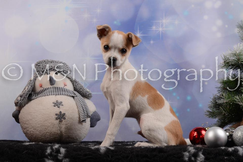 M&N Photography -DSC_6506