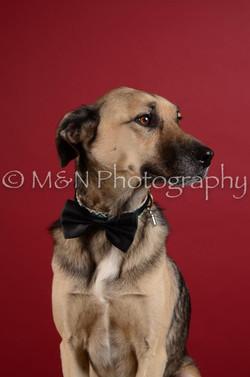 M&N Photography -DSC_3496
