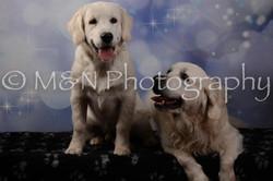M&N Photography -DSC_7107