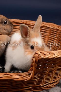 M&N Photography -DSC_0770